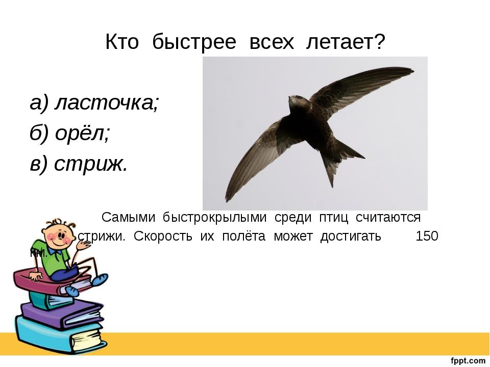Кто быстрее всех летает? а) ласточка; б) орёл; в) стриж. Самыми быстрокры...