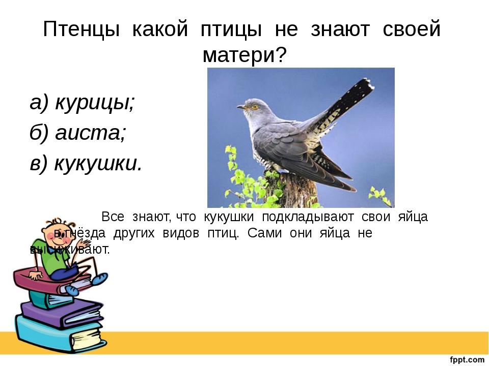 Птенцы какой птицы не знают своей матери? а) курицы; б) аиста; в) кукушки. ...