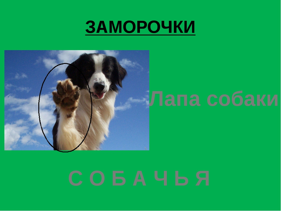 ЗАМОРОЧКИ Лапа собаки С О Б А Ч Ь Я