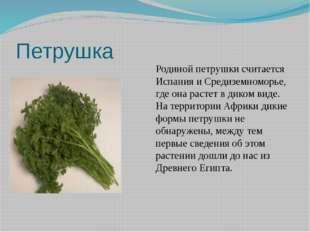 Петрушка Родиной петрушки считается Испания и Средиземноморье, где она растет