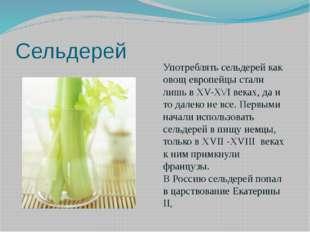 Сельдерей Употреблять сельдерей как овощ европейцы стали лишь в ХV-Х\/I веках