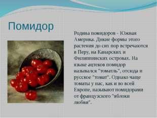 Помидор Родина помидоров - Южная Америка. Дикие формы этого растения до сих п