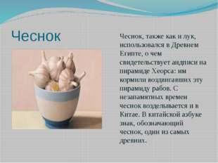 Чеснок Чеснок, также как и лук, использовался в Древнем Египте, о чем свидете