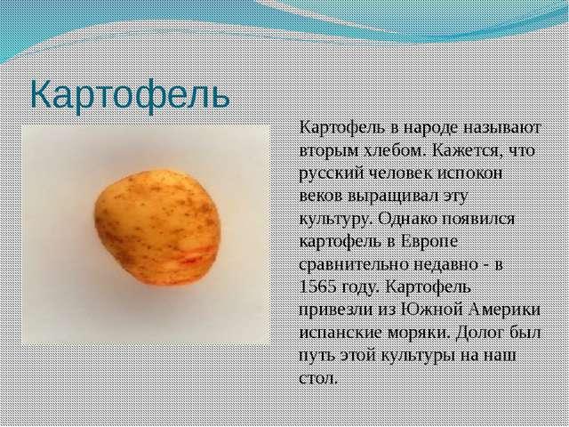 Картофель Картофель в народе называют вторым хлебом. Кажется, что русский чел...