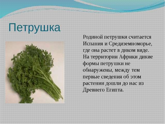 Петрушка Родиной петрушки считается Испания и Средиземноморье, где она растет...