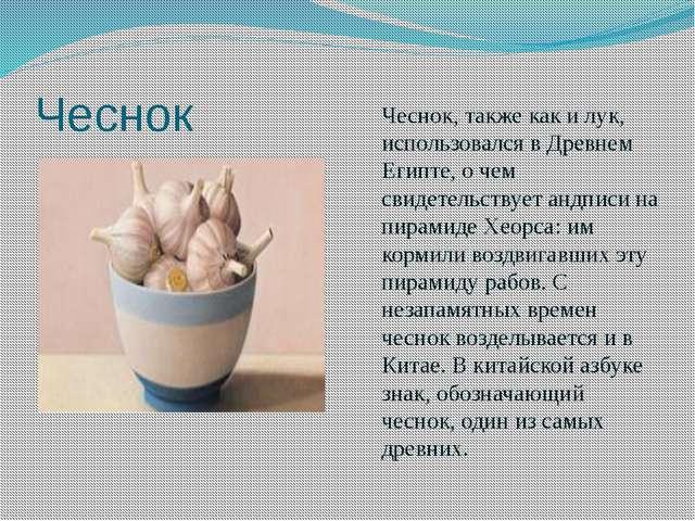Чеснок Чеснок, также как и лук, использовался в Древнем Египте, о чем свидете...
