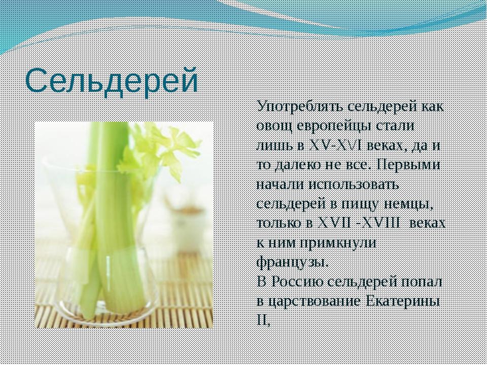 Сельдерей Употреблять сельдерей как овощ европейцы стали лишь в ХV-Х\/I веках...