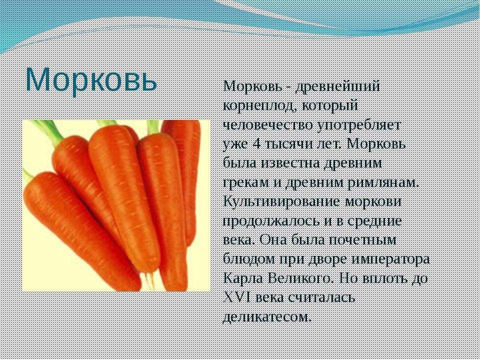 Морковь Морковь - древнейший корнеплод, который человечество употребляет уже...