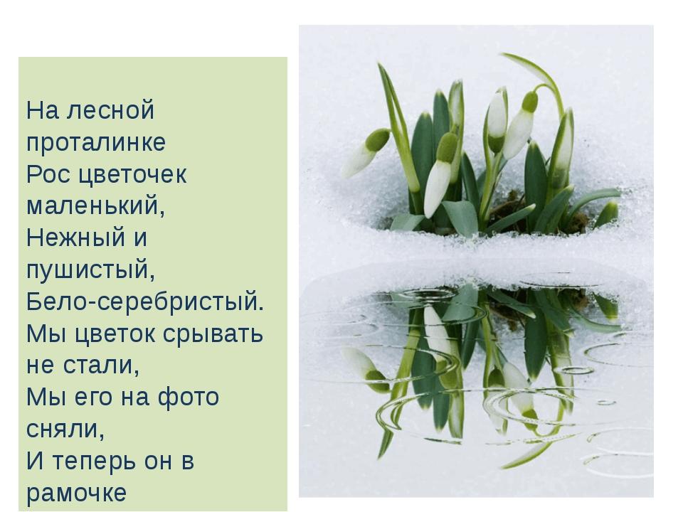 На лесной проталинке Рос цветочек маленький, Нежный и пушистый, Бело-серебри...
