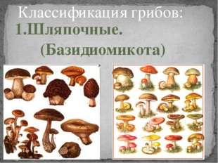 Классификация грибов: 1.Шляпочные. (Базидиомикота)