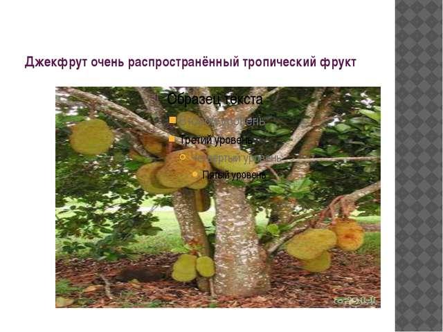 Джекфрут очень распространённый тропический фрукт