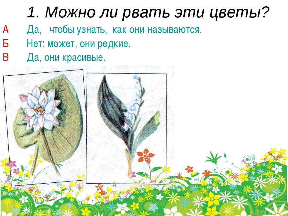 1. Можно ли рвать эти цветы? А Да, чтобы узнать, как они называются. Б Нет: м...