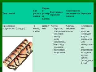 Тип тканейГде расположенаФорма и размеры клетокВнутреннее строениеОсобенн