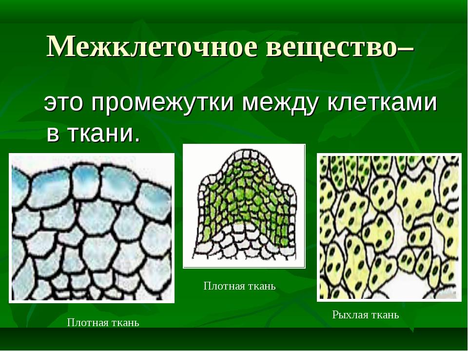 Межклеточное вещество– это промежутки между клетками в ткани. Плотная ткань П...