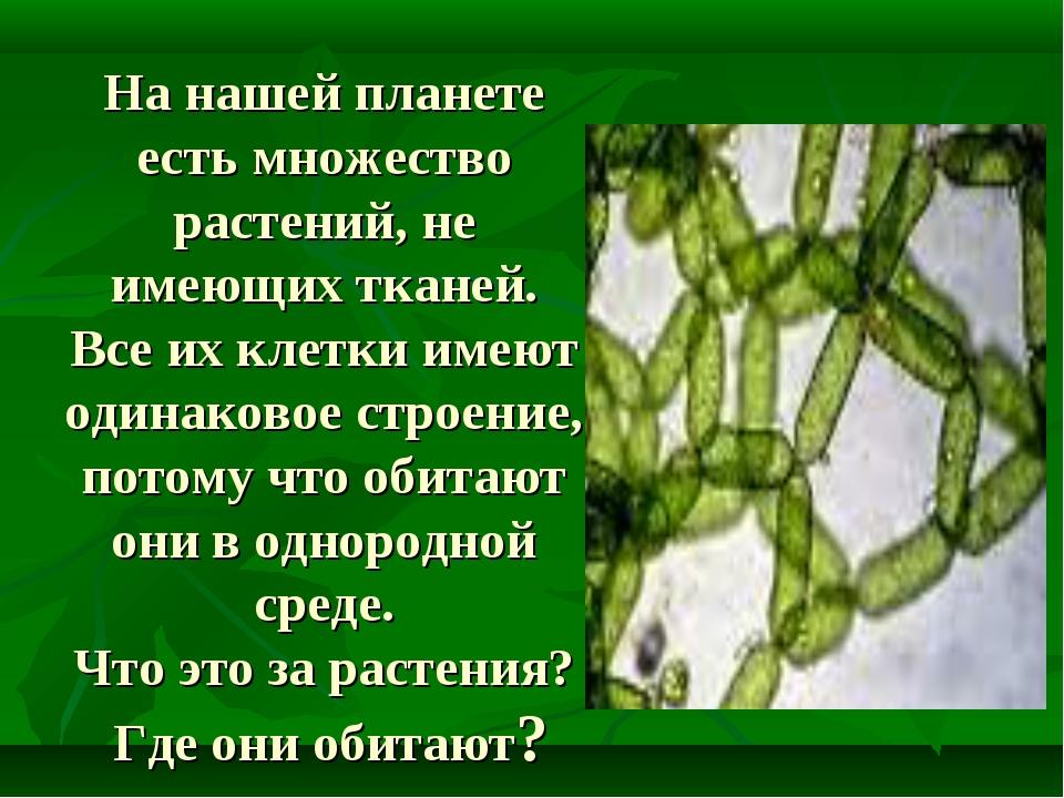 На нашей планете есть множество растений, не имеющих тканей. Все их клетки им...