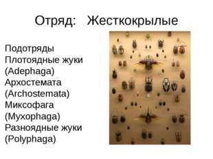Отряд: Жесткокрылые Подотряды Плотоядные жуки (Adephaga) Архостемата (Archos