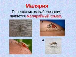 Малярия Переносчиком заболевания является малярийный комар. 1 2 3 4