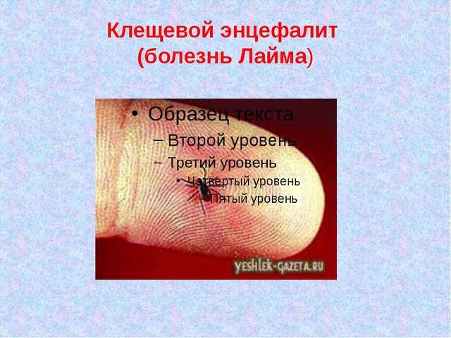 Клещевой энцефалит (болезнь Лайма)