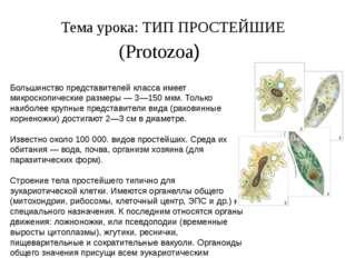 Тема урока: ТИП ПРОСТЕЙШИЕ (Protozoa) Большинство представителей класса имеет