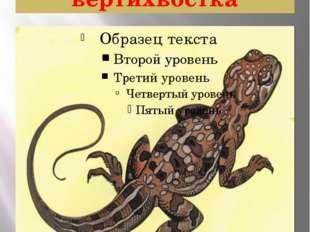Ящерица круглоголовка-вертихвостка