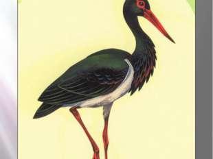 Черный аист Черный аист Ciconia nigra (Linnaeus, 1758) Класс птицы - AVES Отр