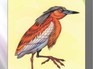 Желтая цапля ЖЕЛТАЯ ЦАПЛЯ Ardeola ralloides Scopoli, 1765 Класс птицы - AVES