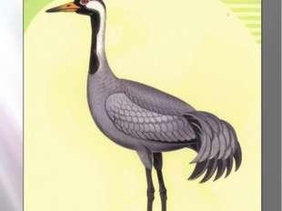 Серый журавль СЕРЫЙ ЖУРАВЛЬ Grus grus (Linnaeus, 1758) Класс птицы - AVES Отр