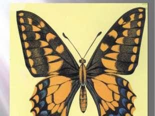 Бабочка махаон МАХАОН Papilio machaon (Linnaeus, 1758) Класс Насекомые - INSE