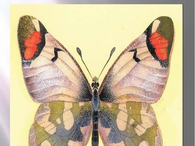 Бабочка зорька-зегрис Желтонизый Зегрис Zegris eupheme Esper, 1805 Класс Насе...