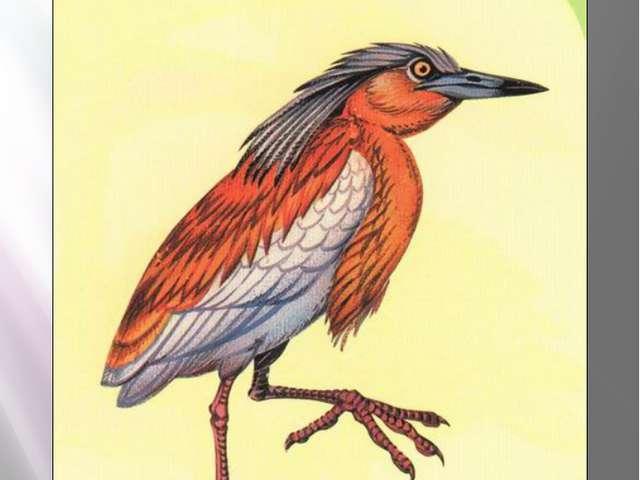 Желтая цапля ЖЕЛТАЯ ЦАПЛЯ Ardeola ralloides Scopoli, 1765 Класс птицы - AVES...