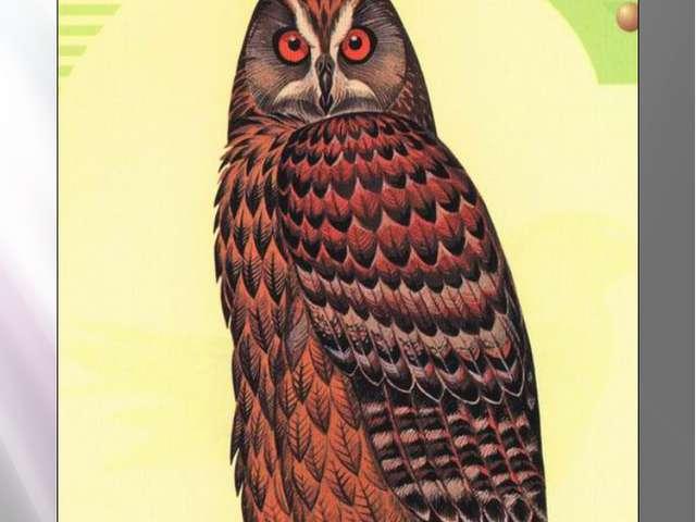 филин Филин Bubo bubo Linnaeus, 1758 Класс птицы - AVES Отряд Совообразные- S...