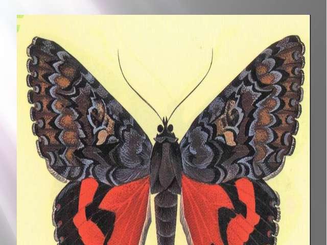 Бабочка малиновая орденская лента Орденская лента малиновая Catocala sponsa (...