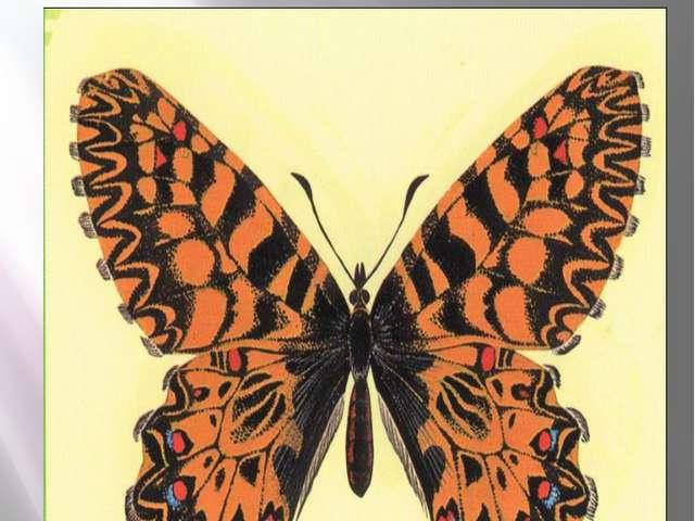 Бабочка поликсена Поликсена Zerynthia polyxena Denis & Schiffermüller, 1775 К...