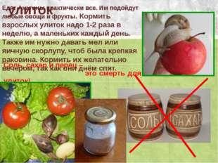 Питание улиток Соль, сахар и перец – это смерть для улиток! Едят Ахатины прак