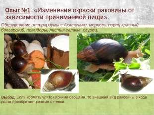 Опыт №1. «Изменение окраски раковины от зависимости принимаемой пищи». Оборуд