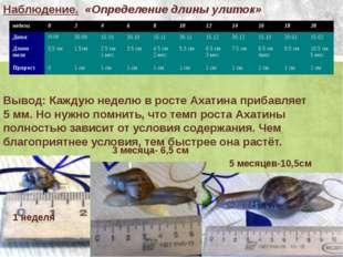 Наблюдение. «Определение длины улиток» Вывод: Каждую неделю в росте Ахатина п