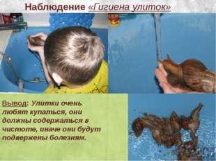 Наблюдение «Гигиена улиток» Вывод: Улитки очень любят купаться, они должны со