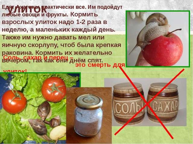 Питание улиток Соль, сахар и перец – это смерть для улиток! Едят Ахатины прак...