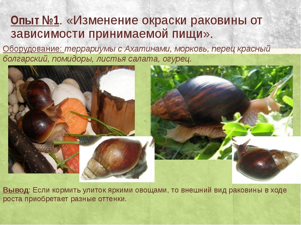 Опыт №1. «Изменение окраски раковины от зависимости принимаемой пищи». Оборуд...