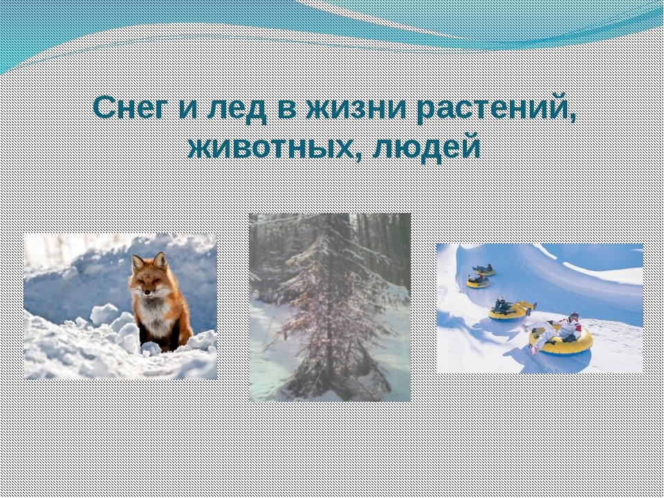Снег и лед в жизни растений, животных, людей