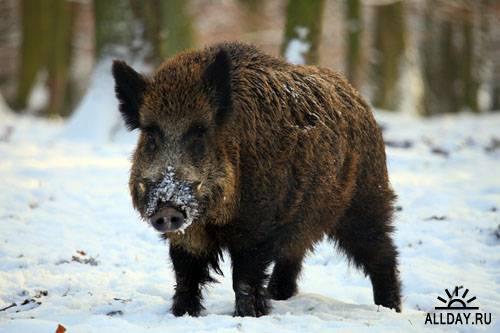 C:\Users\пк\Desktop\Картинки\1292265438_animals_in_winter_04.jpg