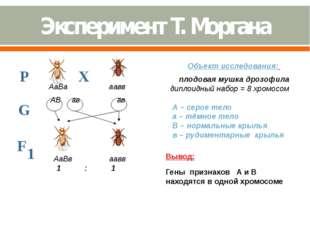 Объект исследования: плодовая мушка дрозофила диплоидный набор = 8 хромосом