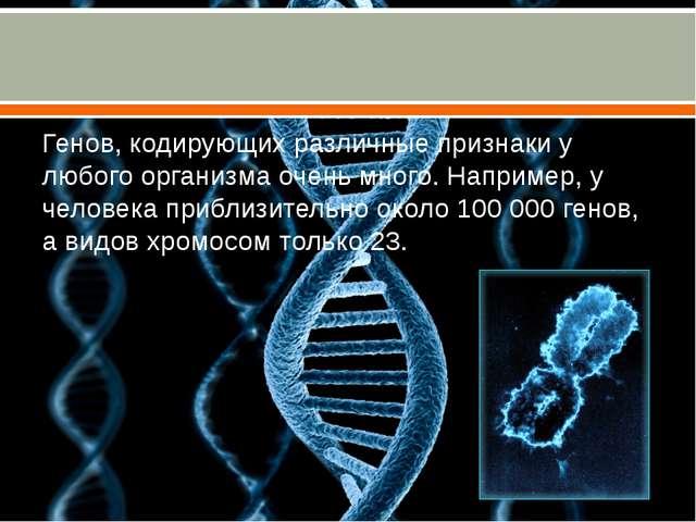 Генов, кодирующих различные признаки у любого организма очень много. Наприме...