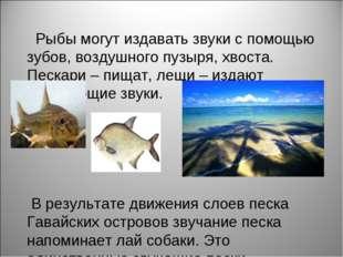 Рыбы могут издавать звуки с помощью зубов, воздушного пузыря, хвоста. Пескар