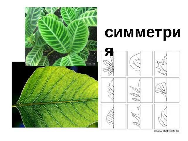 симметрия симметрия