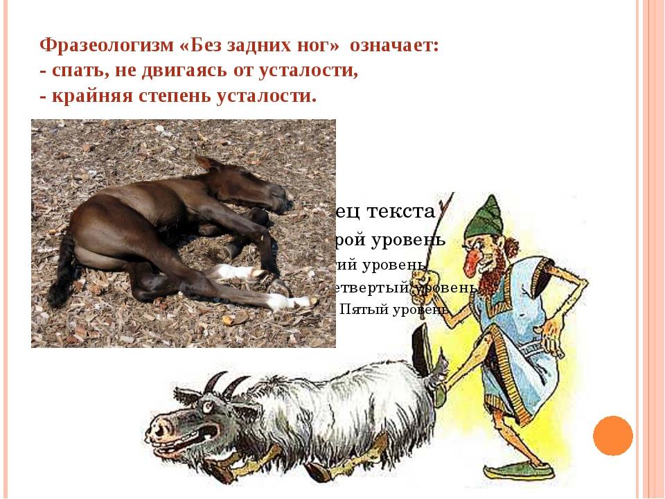 Фразеологизм «Без задних ног» означает: - спать, не двигаясь от усталости, -...