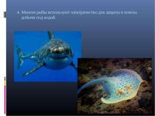 4. Многие рыбы используют электричество для защиты и поиска добычи под водой.