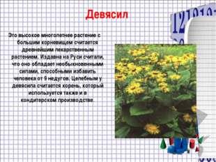 Девясил Это высокое многолетнее растение с большим корневищем считается древн