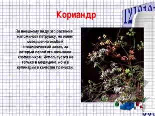 Кориандр По внешнему виду это растение напоминает петрушку, но имеет совершен