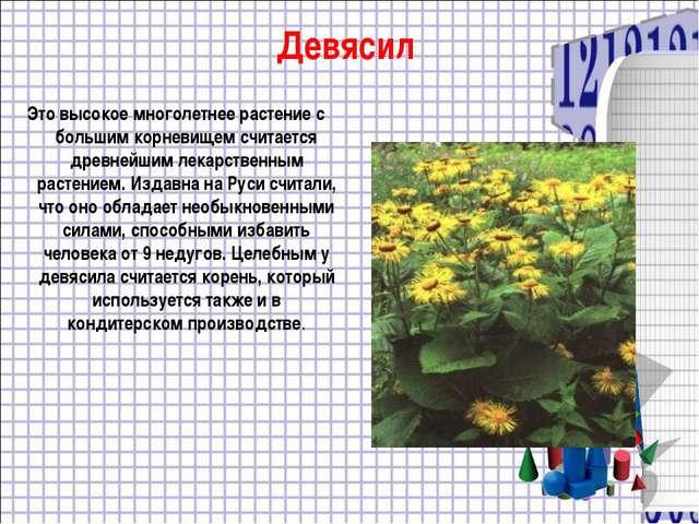 Девясил Это высокое многолетнее растение с большим корневищем считается древн...